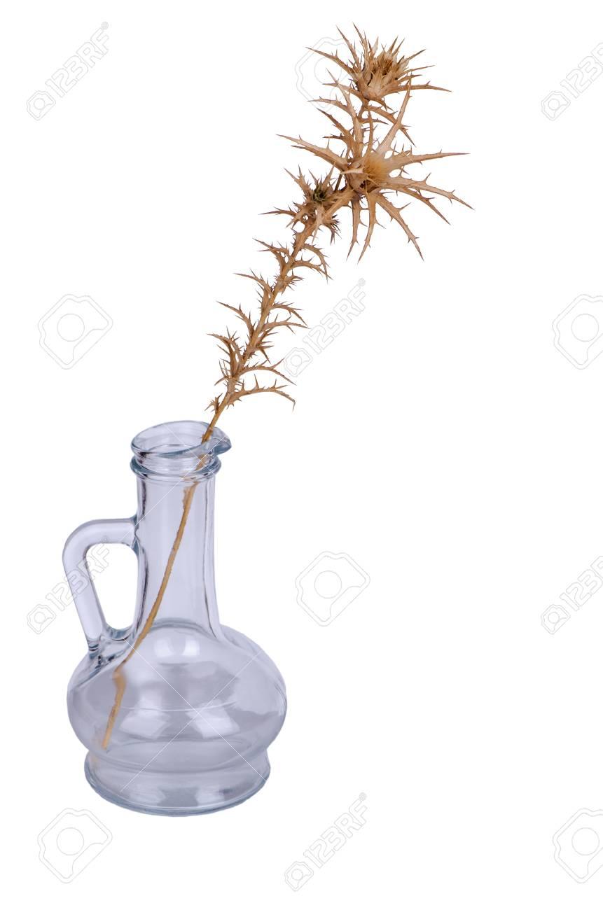 Fleur De Chardon Sechee Dans Un Pot Vide Sans Eau Fleur Seche De
