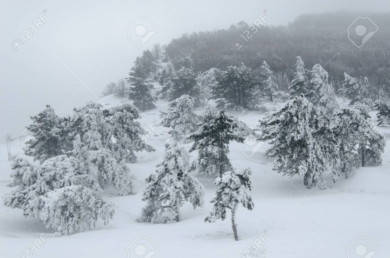 Paysage, Forêt En Tempête De Neige, Il Est Un Jour Méchant Banque ...