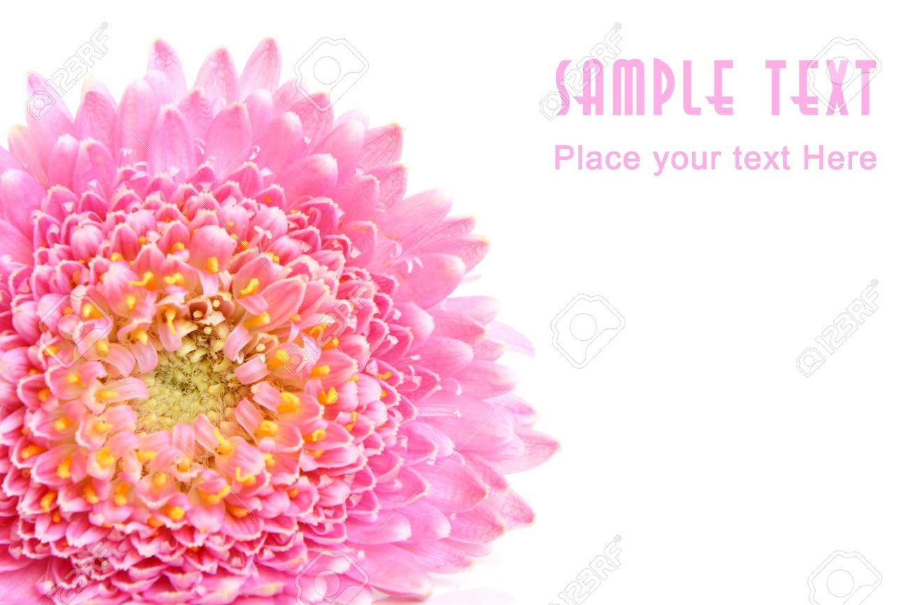 Closeup of pink flower isolated on the white background Stock Photo - 6952655