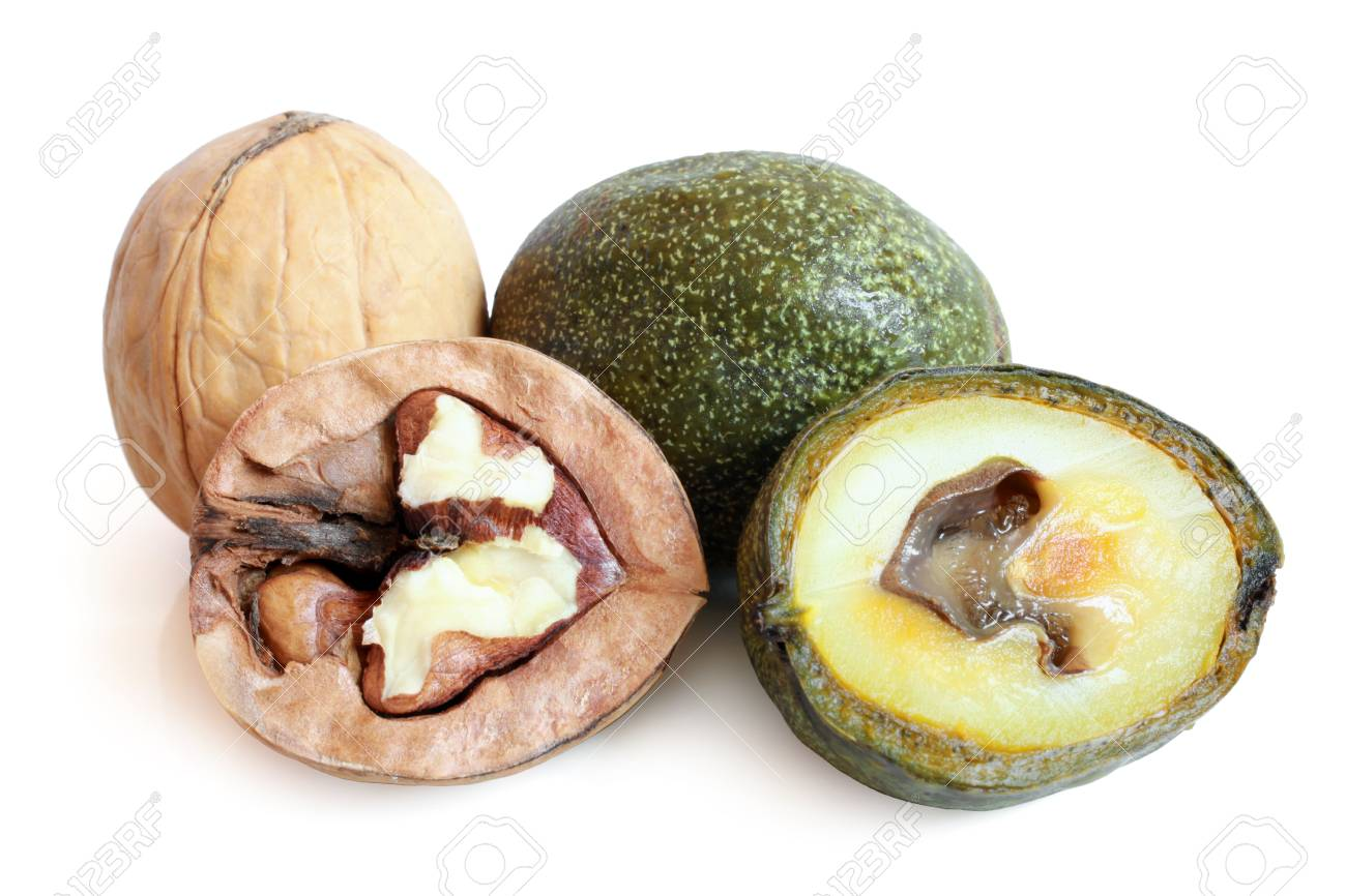 Green and ripe walnuts on a white background Stock Photo - 23283372