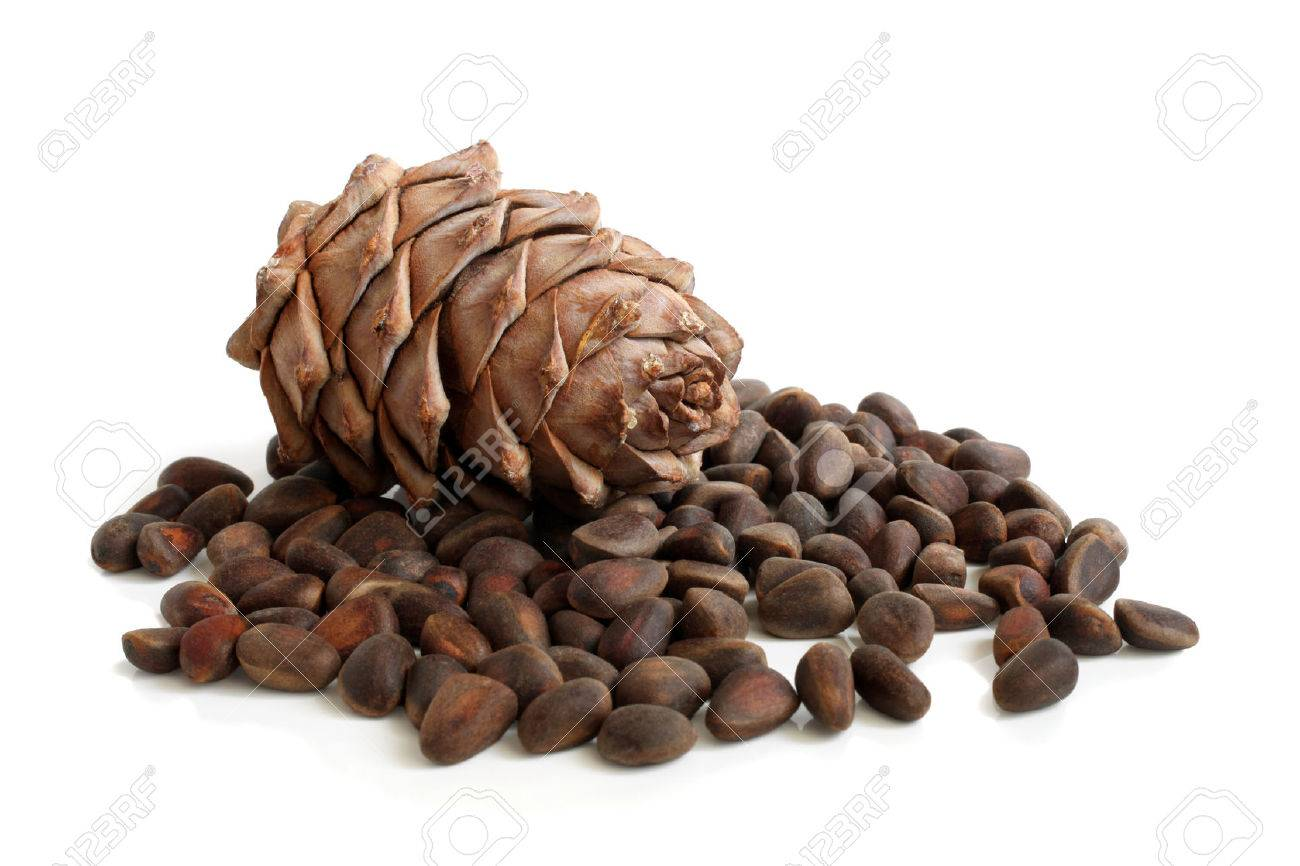 Siberian pine cone and nuts on a white background Stock Photo - 23283615
