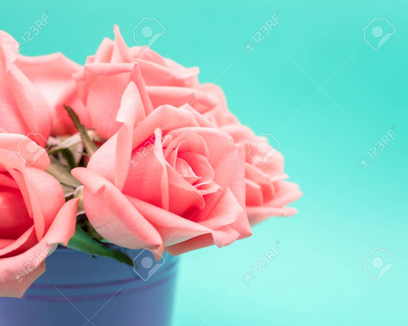 Close-up Image Of Pink Beautiful Rose Flower Bouquet In Flowerpot ...