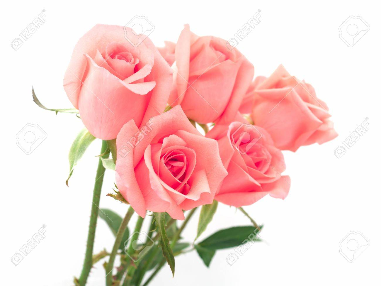 Isolate Image Of Beautiful Pink Rose Flower Bouquet On White Stock