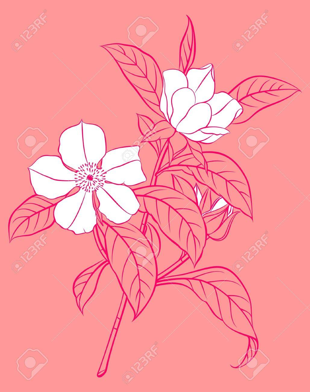 white flowering branch on pink background Stock Vector - 13143890