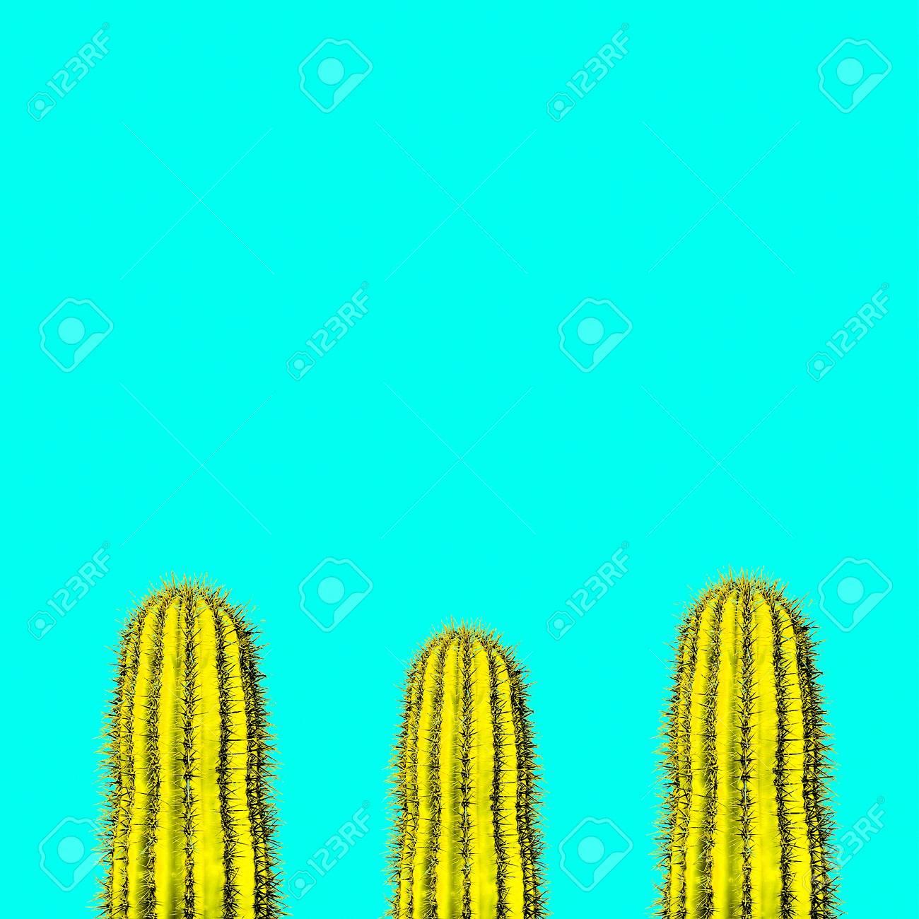 Cactus set. Minimal creative stillife - 77223963