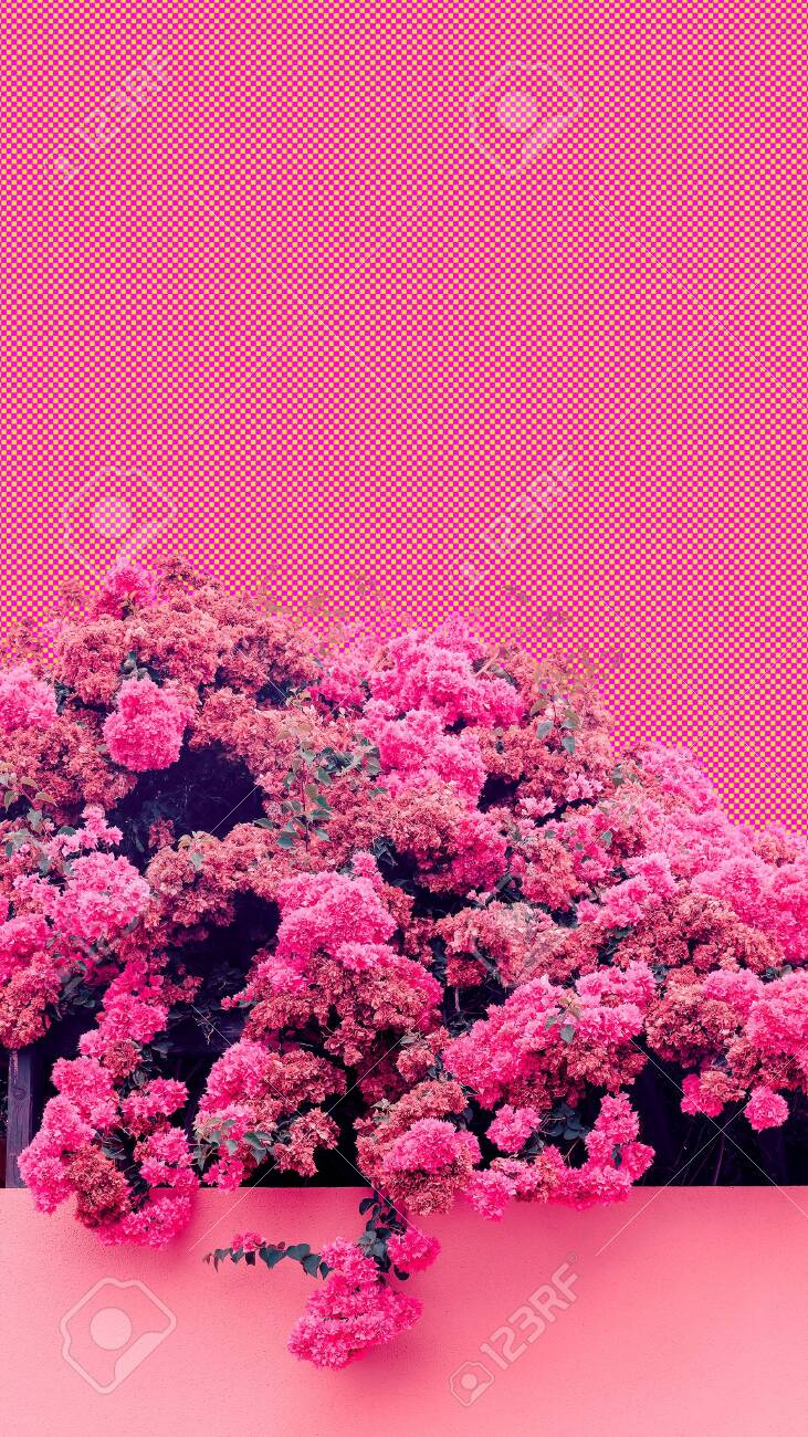 Aesthetic Collage Wallpaper Pink Blooming Flowers Spring Coming Stock Photo Picture And Royalty Free Image Image 150177299
