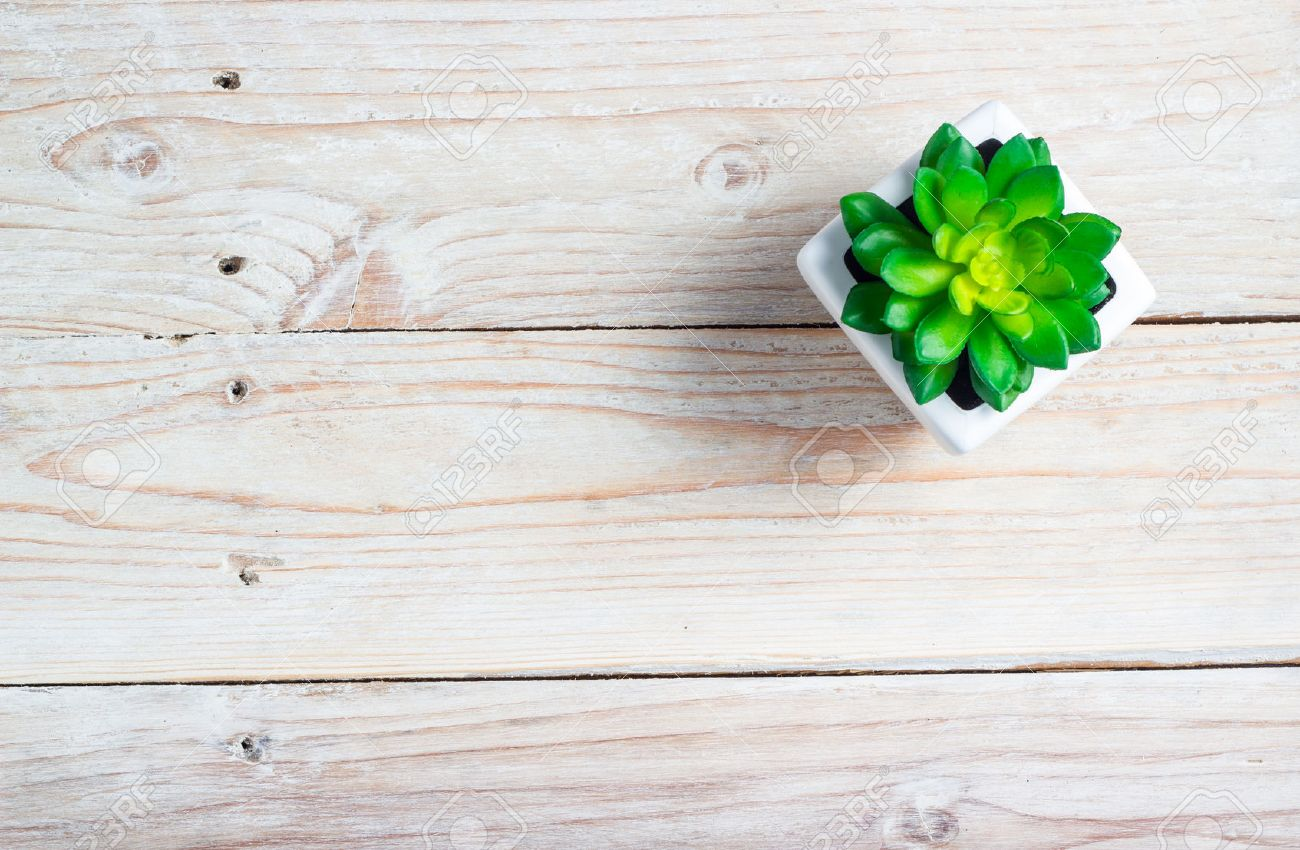 Succulent In Pot Wooden Table Background With Copy Space Stock Photo