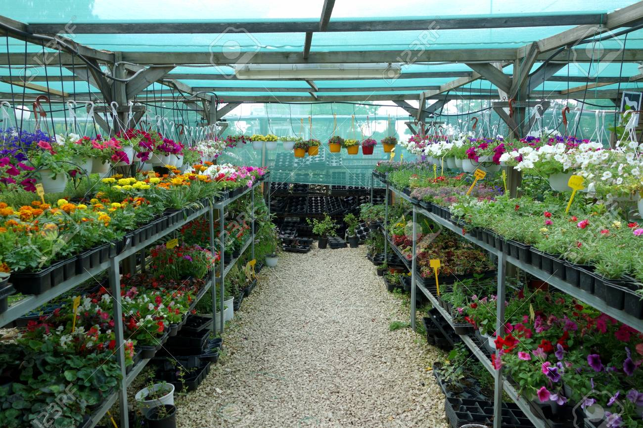 plants and flowers for sale at the plant nursery.