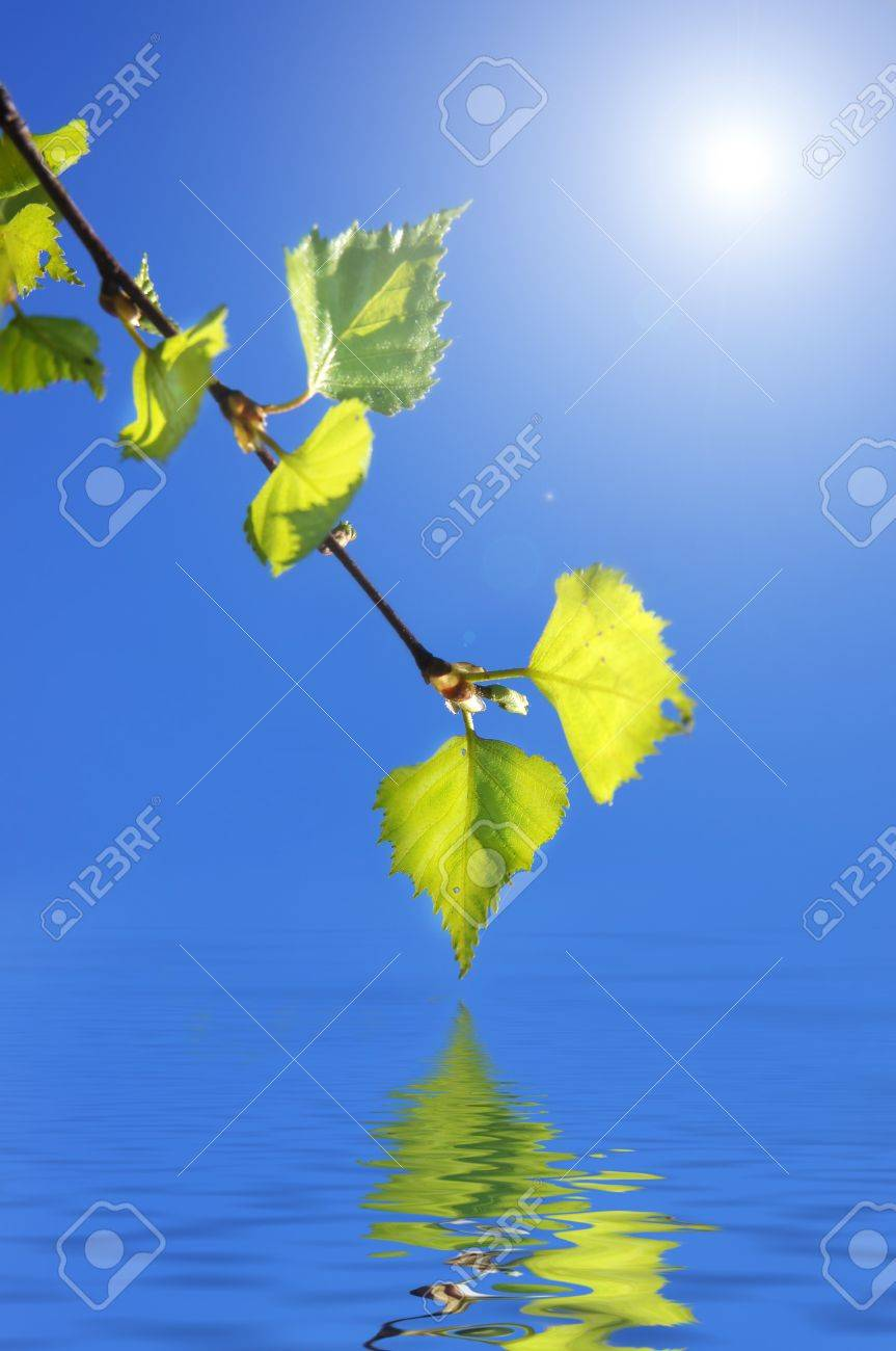 The branch of a birch with green leaves has hung over water Archivio Fotografico - 9555194