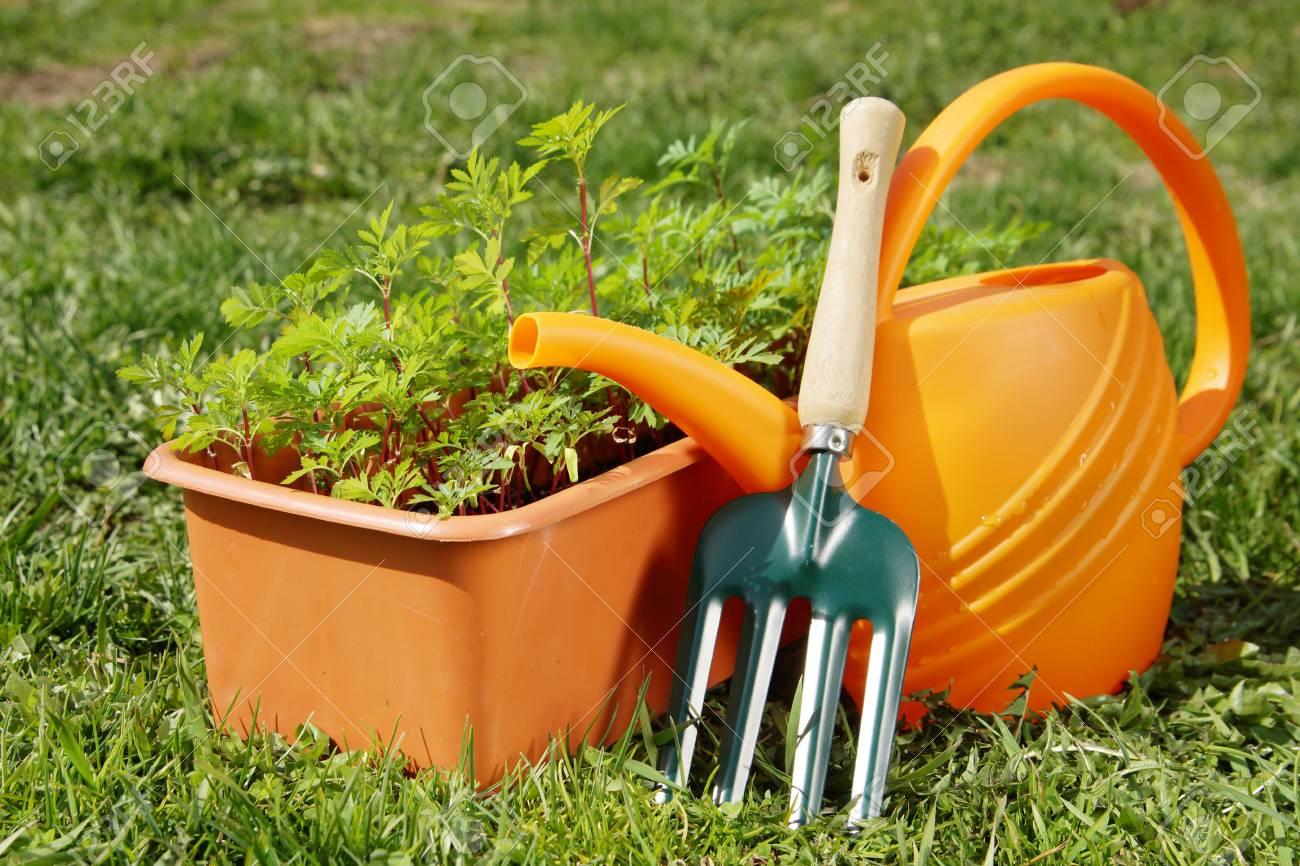 Outils De Jardinage Avec Arrosoir Et Une Boîte De Semis Dans Le ...
