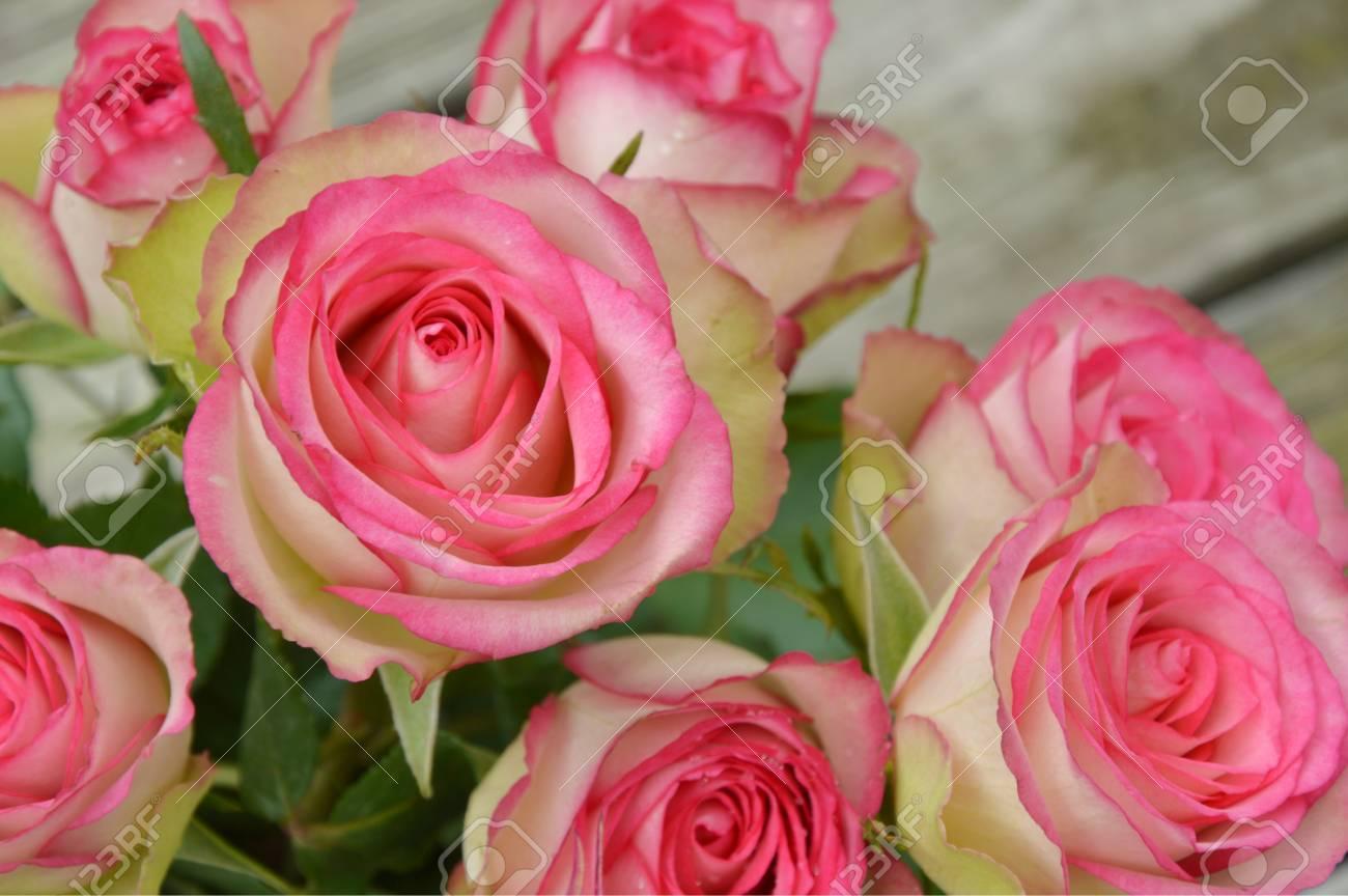 Roses Roses Et Blanches Sur La Table En Bois Fleur Rose Et Blanche