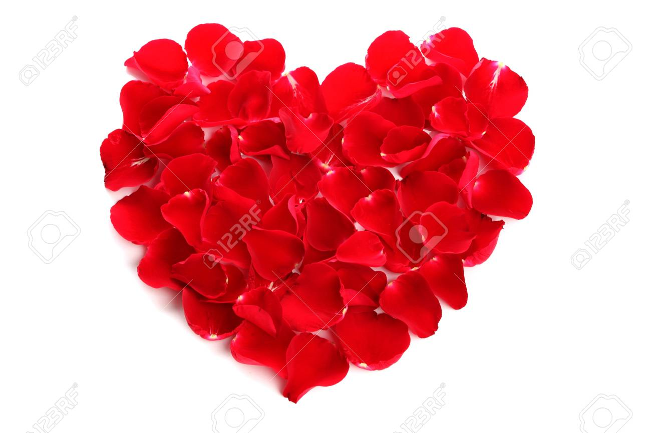 Beautiful heart of red rose petals on white background Stock Photo - 13636351