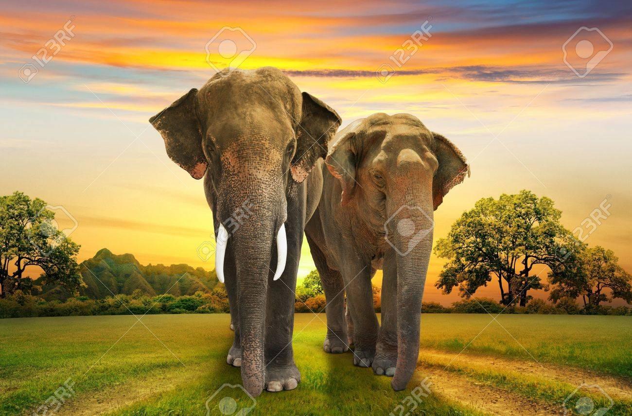 elephants family on sunset - 19728993