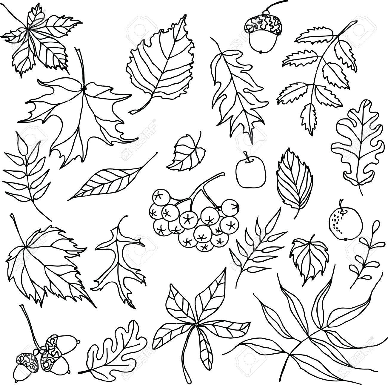 Autumn Leaves Doodles Set Royalty Free Cliparts Vectors And Stock Illustration Image 18600323
