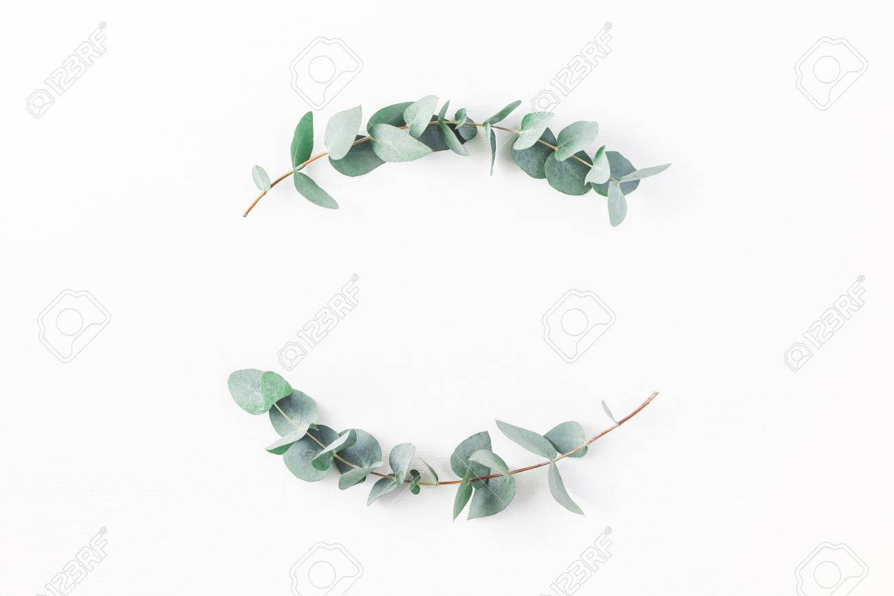Eucalyptus on white background. Wreath made of eucalyptus branches. Flat lay, top view, copy space - 82123429