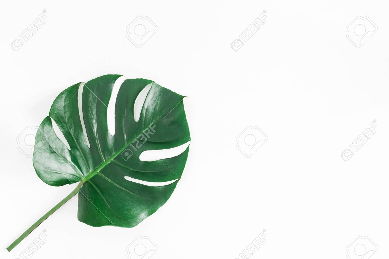 Monstera leaf. Green tropical leaf on white background. Flat lay, top view, copy space - 95436106