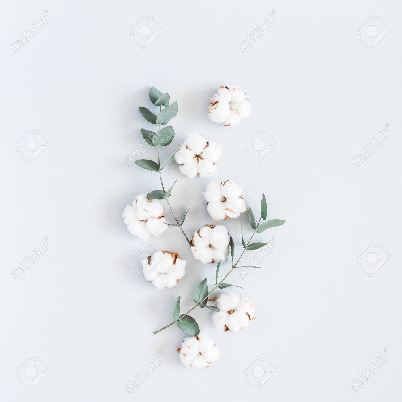 Flowers composition. Pattern made of cotton flowers and eucalyptus branches on pastel blue background. Flat lay, top view, square - 100584530