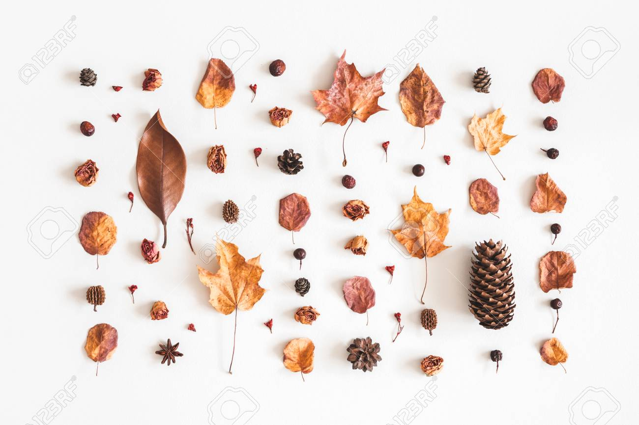Autumn composition. Pattern made of flowers, dried leaves on white background. Autumn, fall concept. Flat lay, top view - 106707529