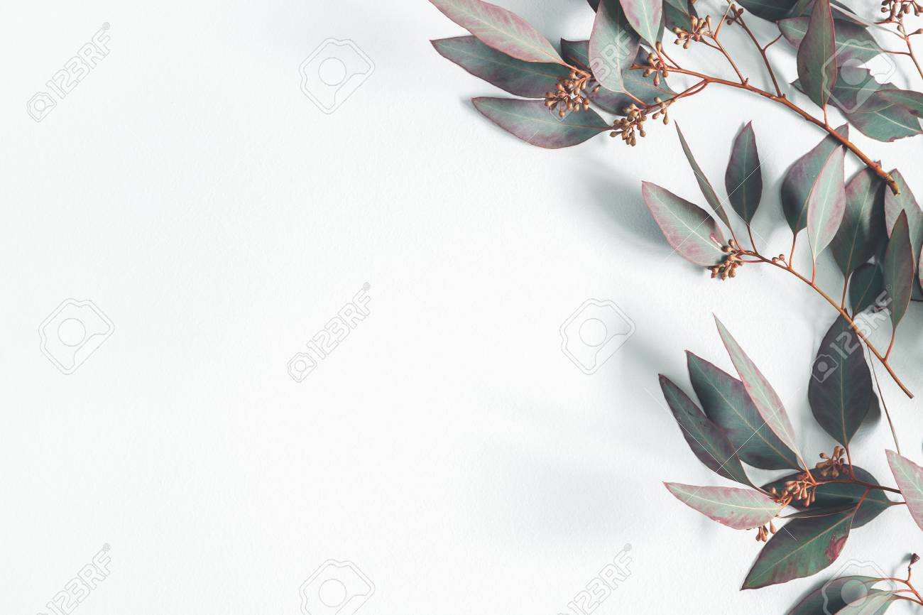 Eucalyptus leaves on pastel gray background. Pattern made of eucalyptus branches. Flat lay, top view, copy space - 117684167