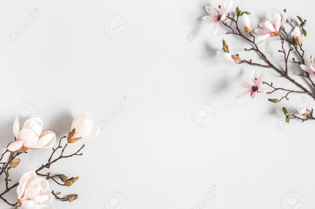 Flowers composition. Magnolia flowers on pastel gray background. Flat lay, top view, copy space - 123629197