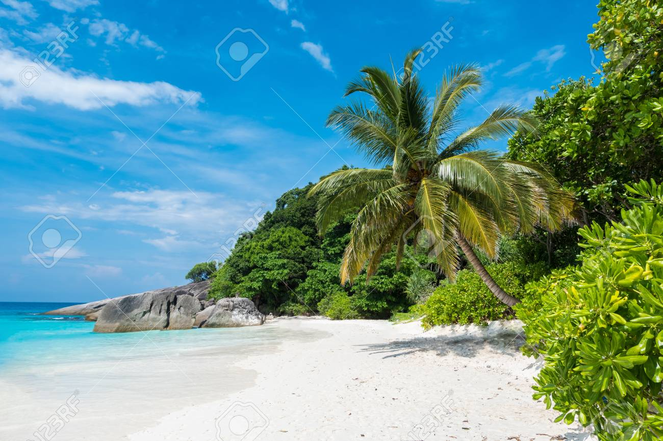 Beautiful view with blue sky and clouds, blue sea and white sand beach with coconut tree on Similan island, No.8 at Similan national park, Phuket, Thailand is most popular for tourist. Copy space background for vacation. - 79526462