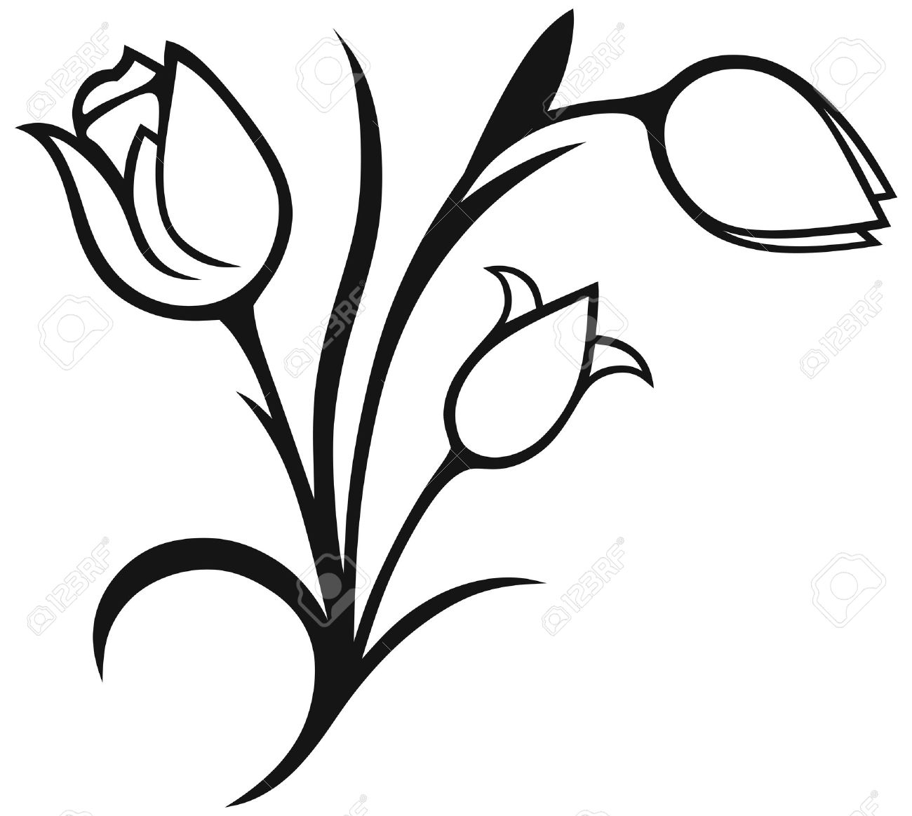 bouquet of tulips isolated on white background silhouette royalty