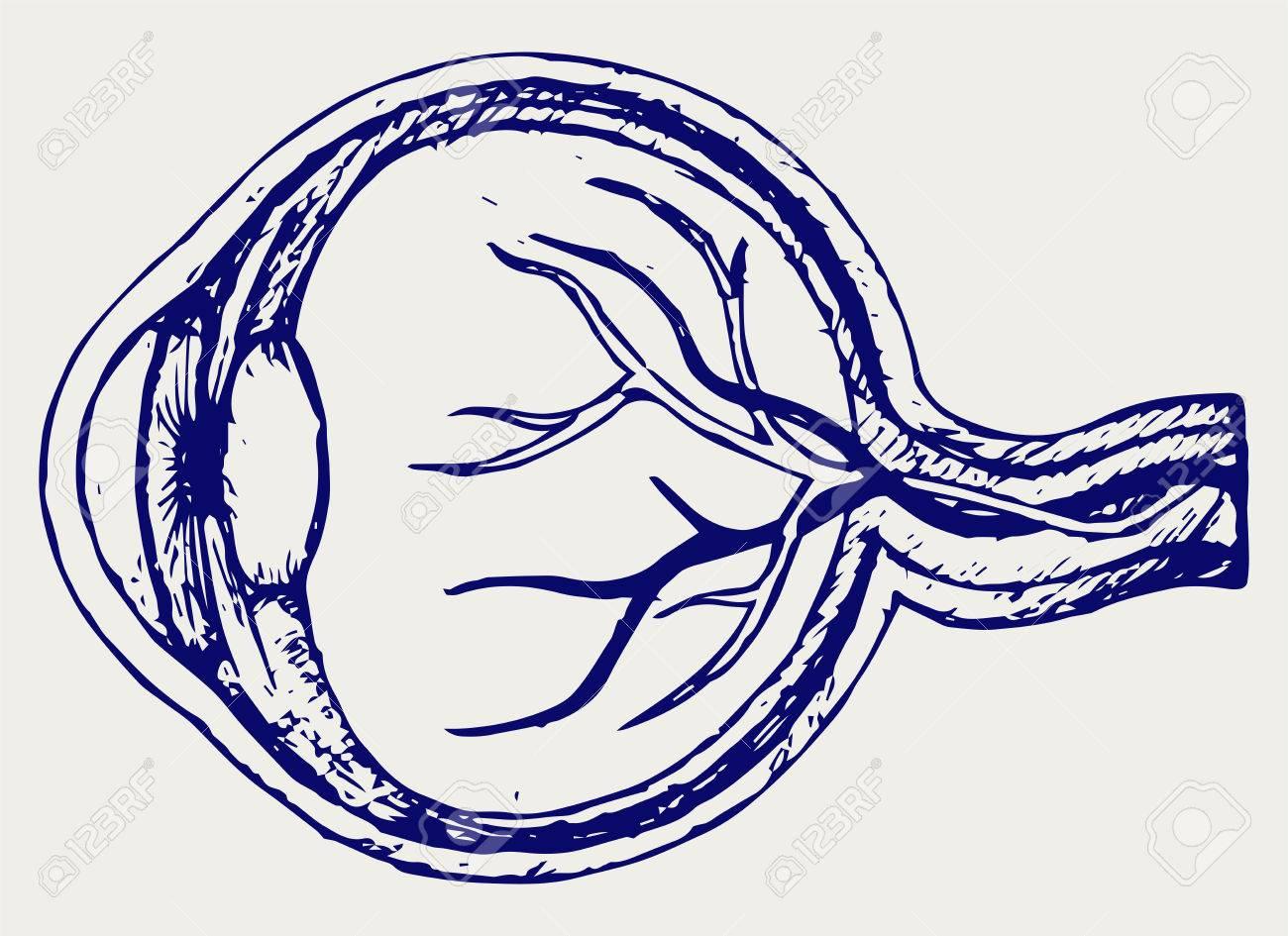 Anatomía Del Ojo Humano. Doodle Estilo Ilustraciones Vectoriales ...