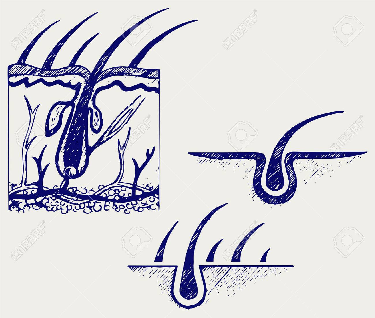 Hair Anatomy And Hair Follicle. Doodle Style Royalty Free Cliparts ...