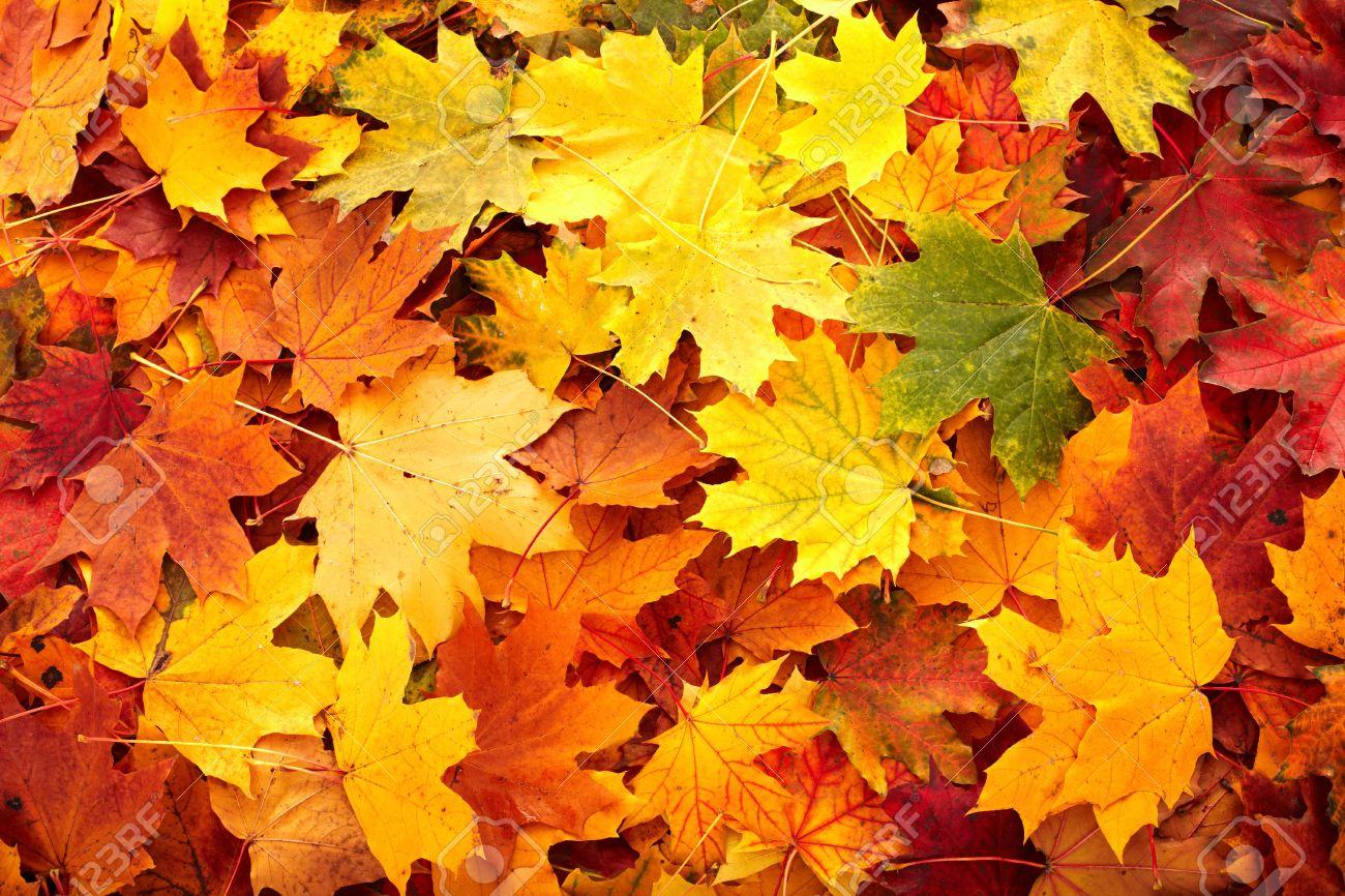 Background group autumn orange leaf. Outdoor. Stock Photo - 5722067