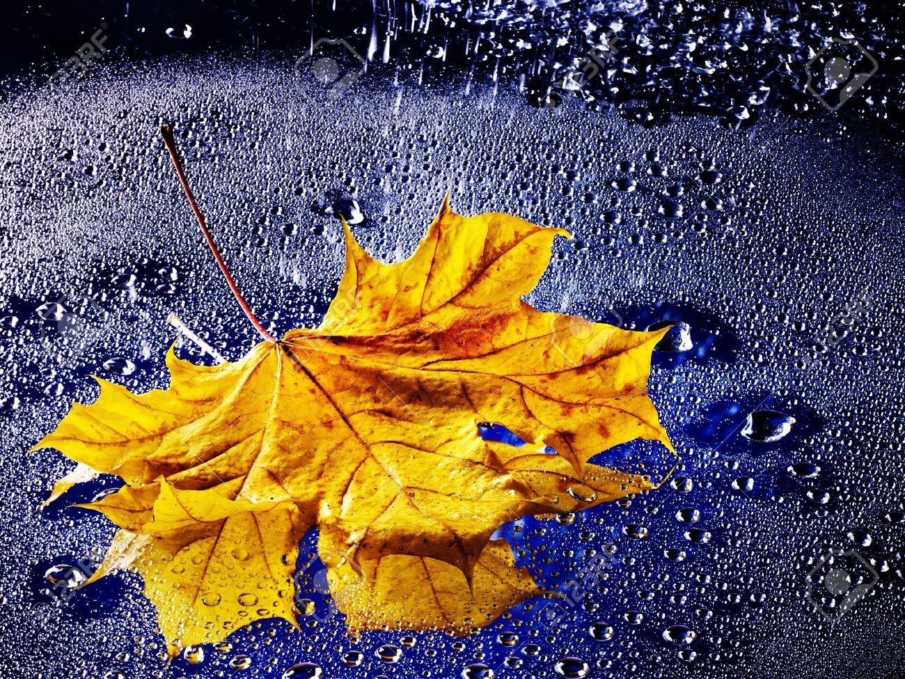 Wallpaper Leaf Drops Rain Autumn Water HD Picture Image
