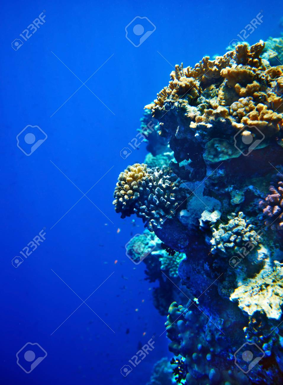Group of coral fish  blue water. Stock Photo - 11978413