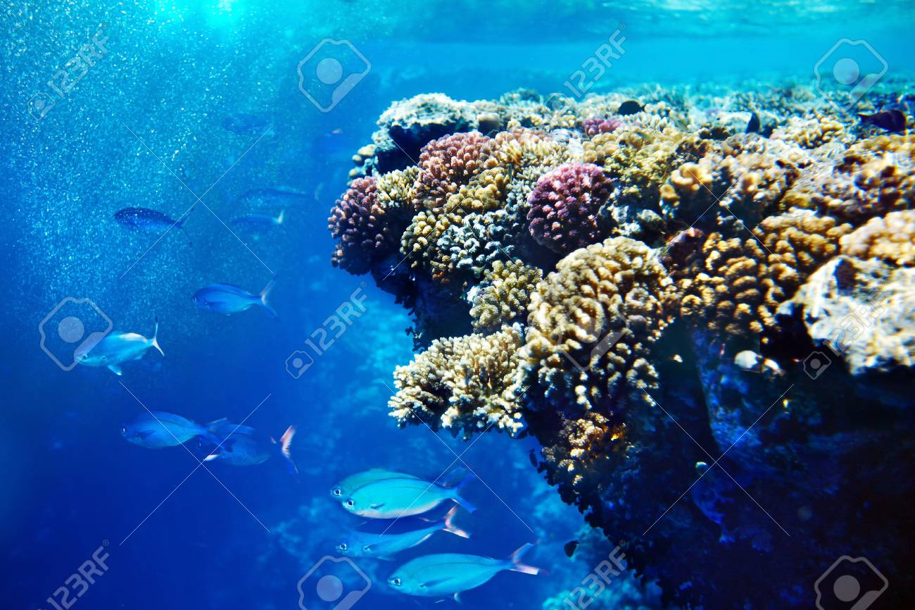 Group of coral fish  blue water Stock Photo - 15594550