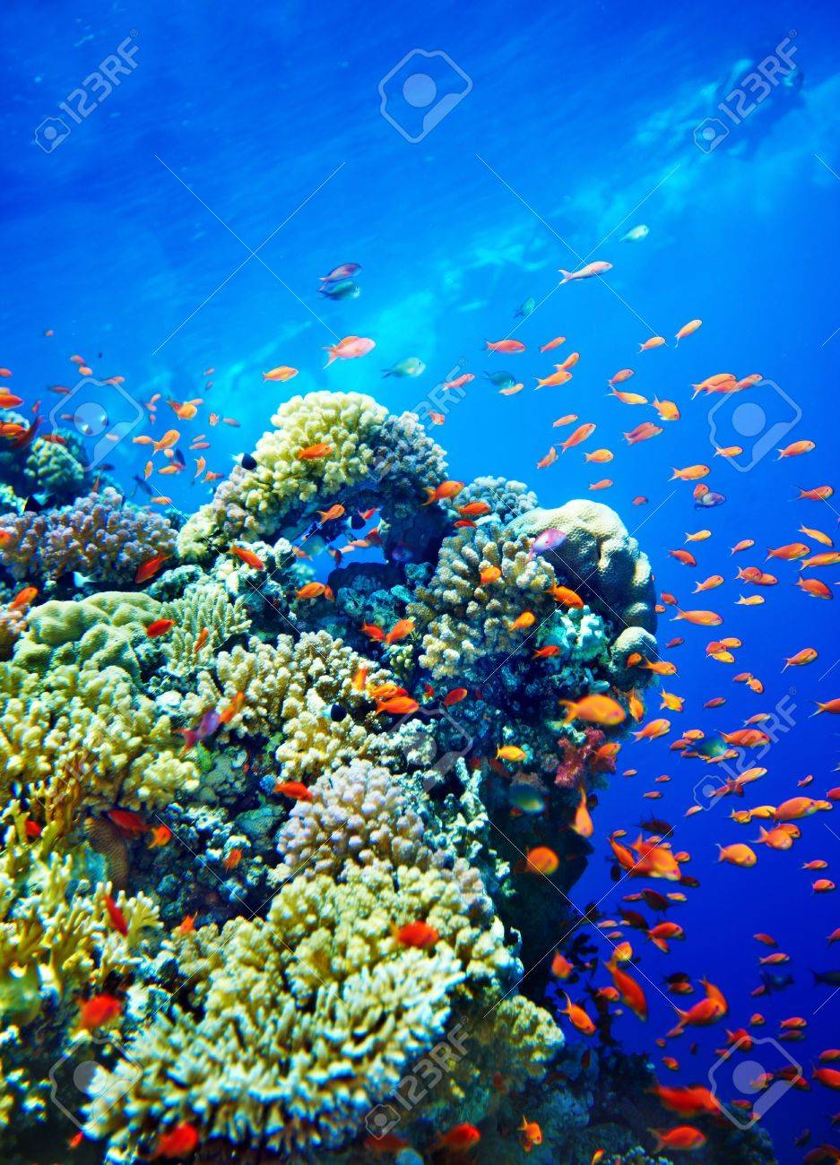 Group of coral fish  blue water. Stock Photo - 12340823