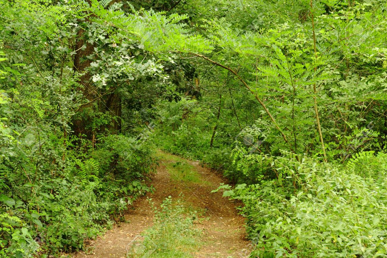 Path in the green forest in summer Stock Photo - 5984548