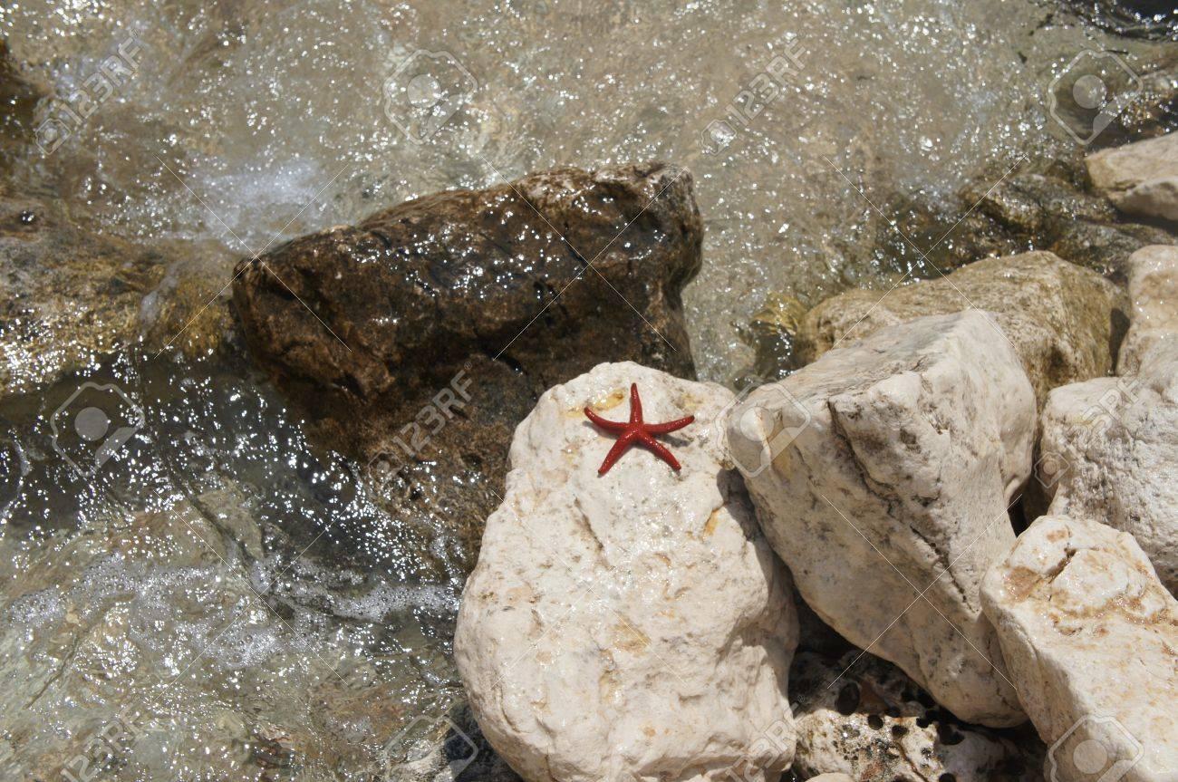 Red starfish on sea coast  Sardinia, Italy Stock Photo - 16230644