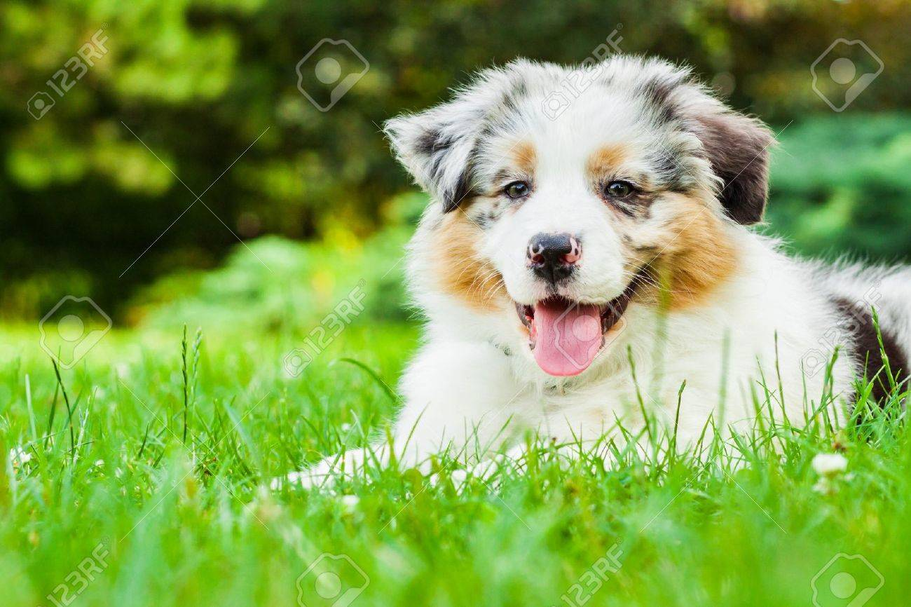 Young puppy lying on fresh green grass in public park - 16939728