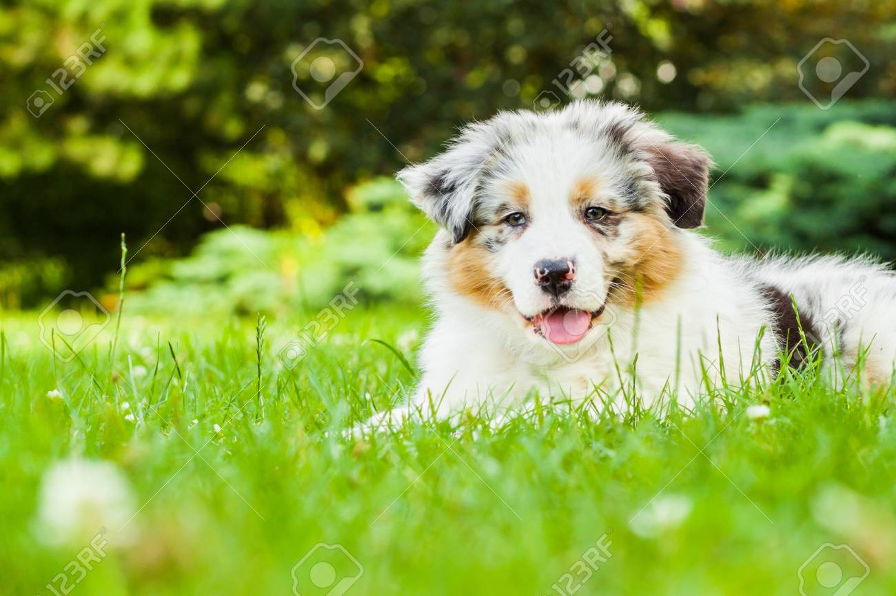 Young puppy lying on fresh green grass in public park - 16939842