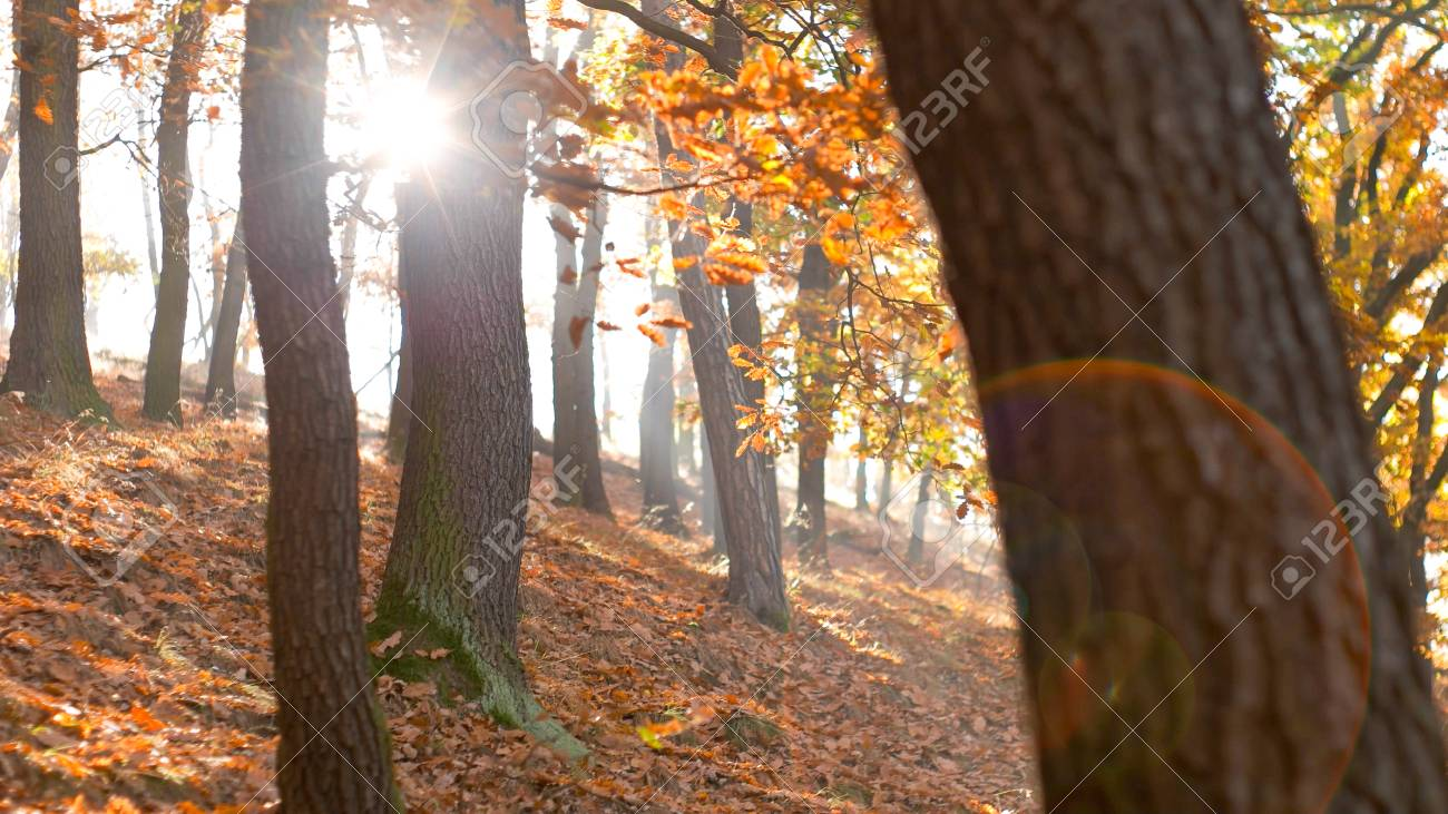 Static look at calm tranquil forest scene, hillside - 56219594