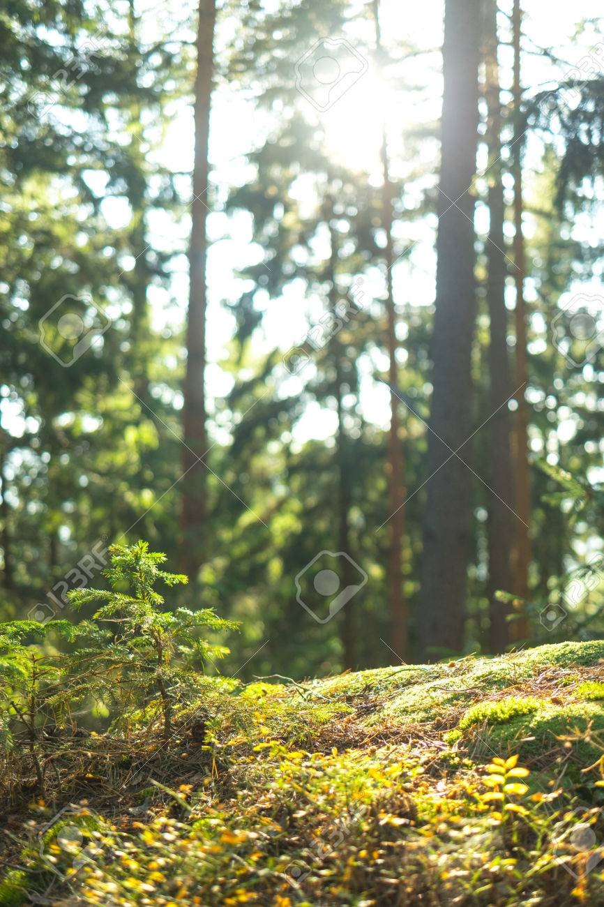 A down-low look at the tranquil forest, leaves and spider webs slowly moving in the wind - 56219612