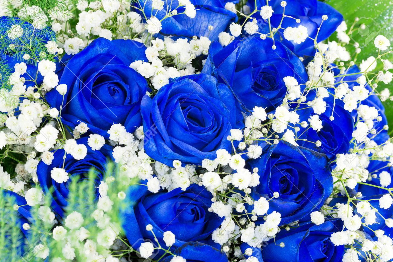Bouquet Of Blue Flowers- Roses Stock Photo, Picture And Royalty Free ...