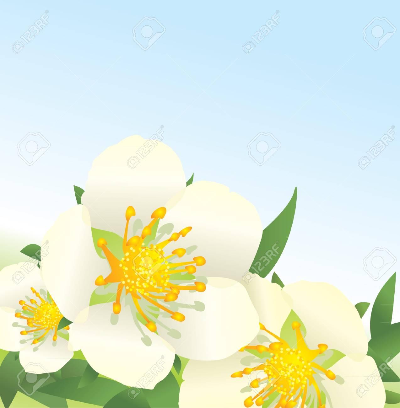 white wild roses flowers on blue sky background Stock Photo - 13489847