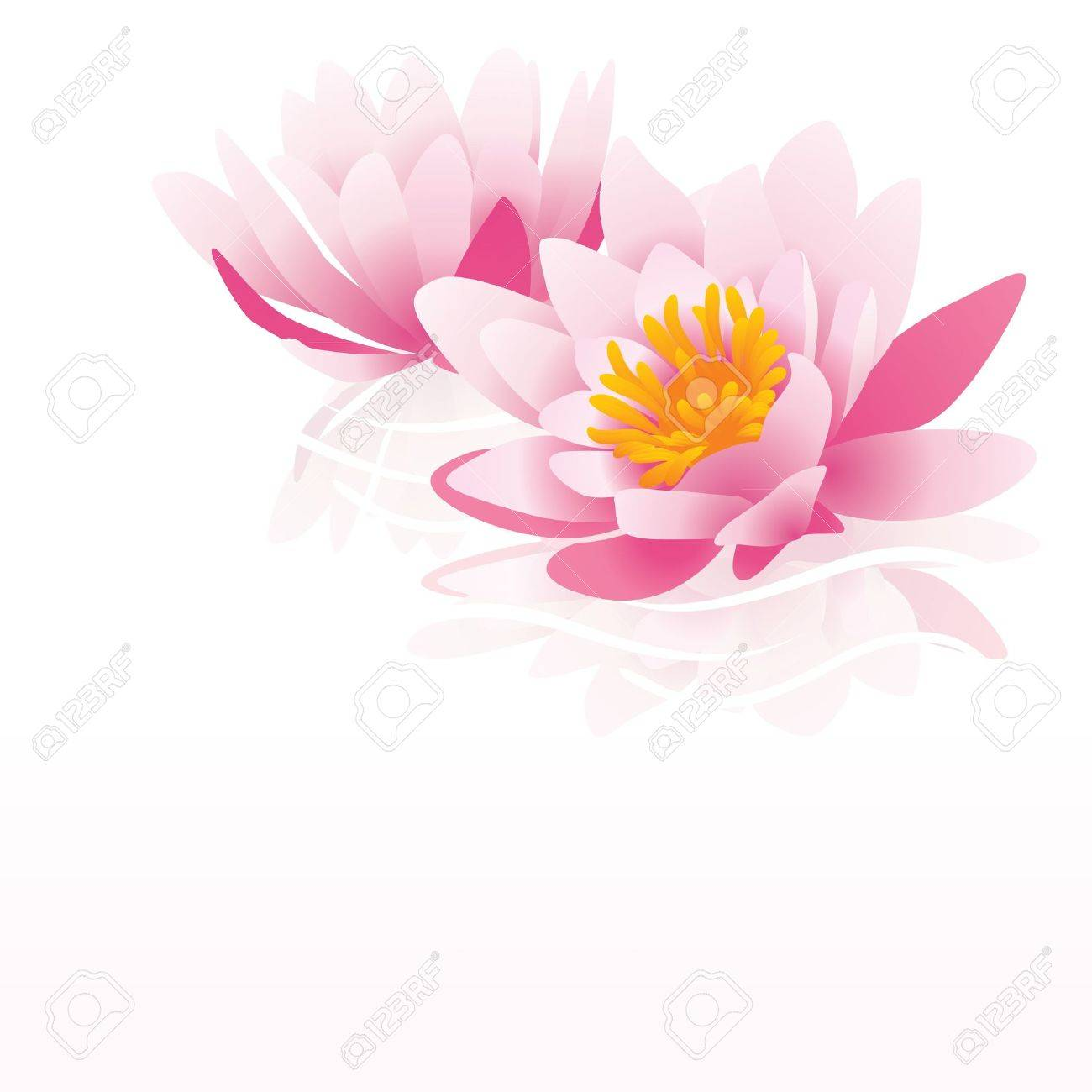 白地にピンクの睡蓮ベクトル イラスト の写真素材画像素材 Image 13737432