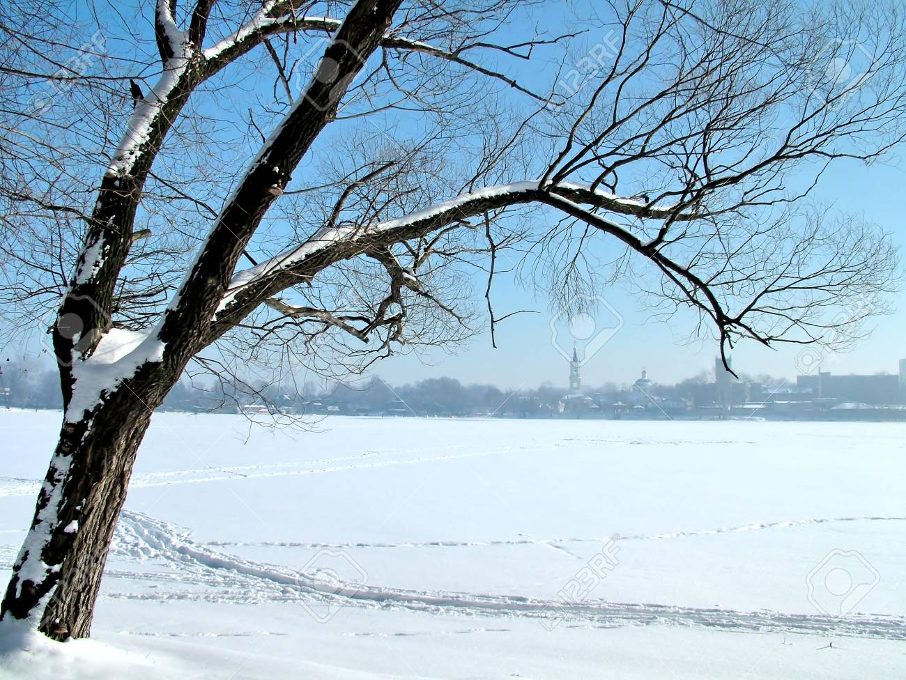 Tree on the shore of the icy lake Stock Photo - 2021576