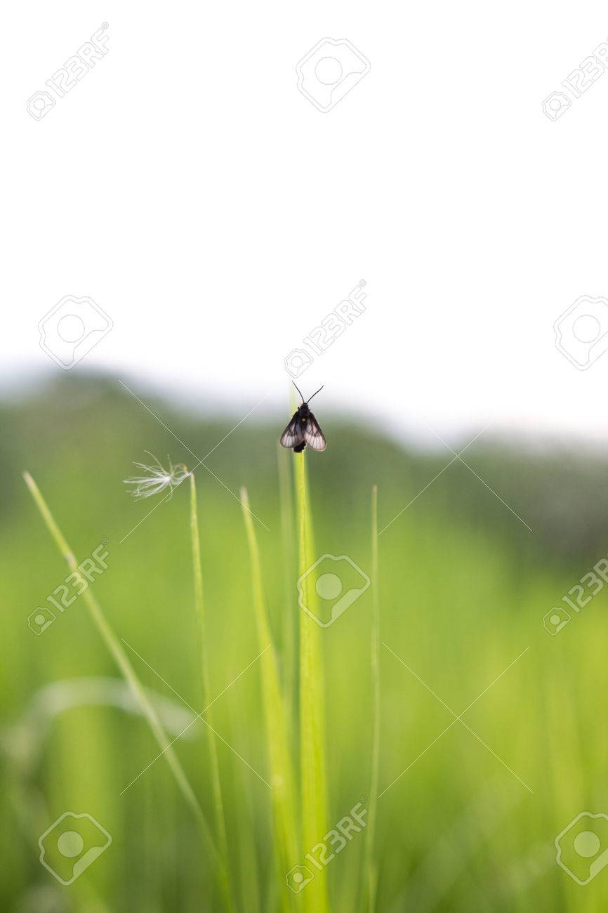 An insect clings to a blade of grass - 44554325