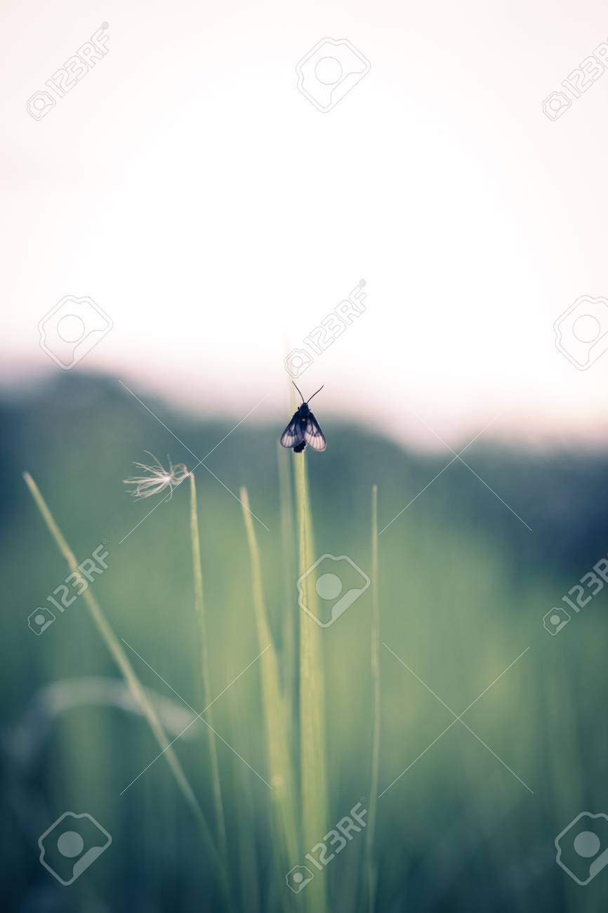 An insect clings to a blade of grass,vintage - 44897640