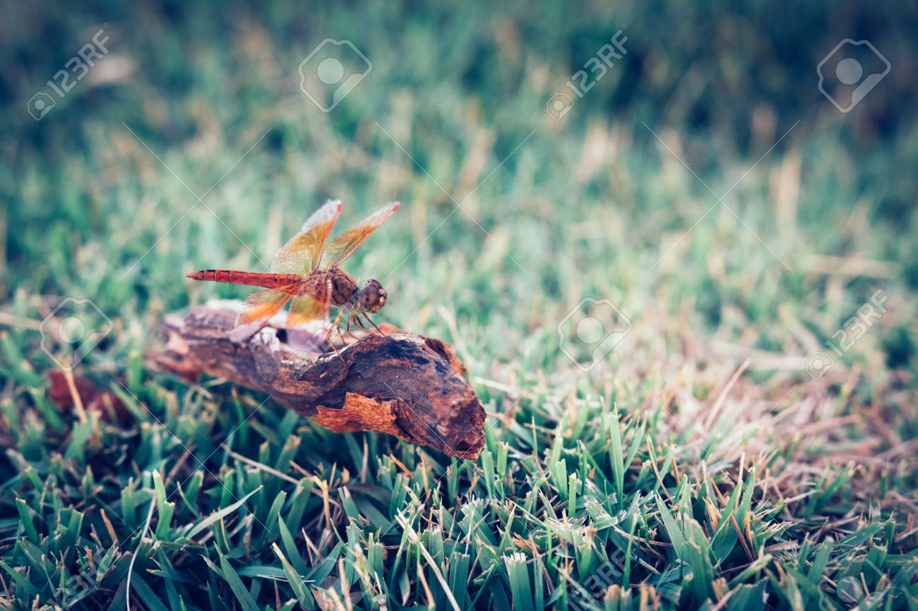 Dragonfly clinging to a blade of grass, select focus,vintage - 44897642