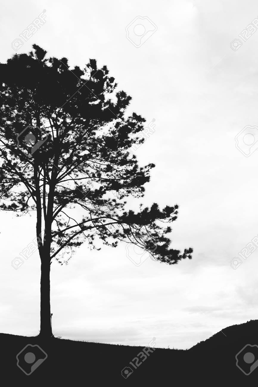 Tree isolated on the mountain,vintage gain ,blackandwhite - 44897651