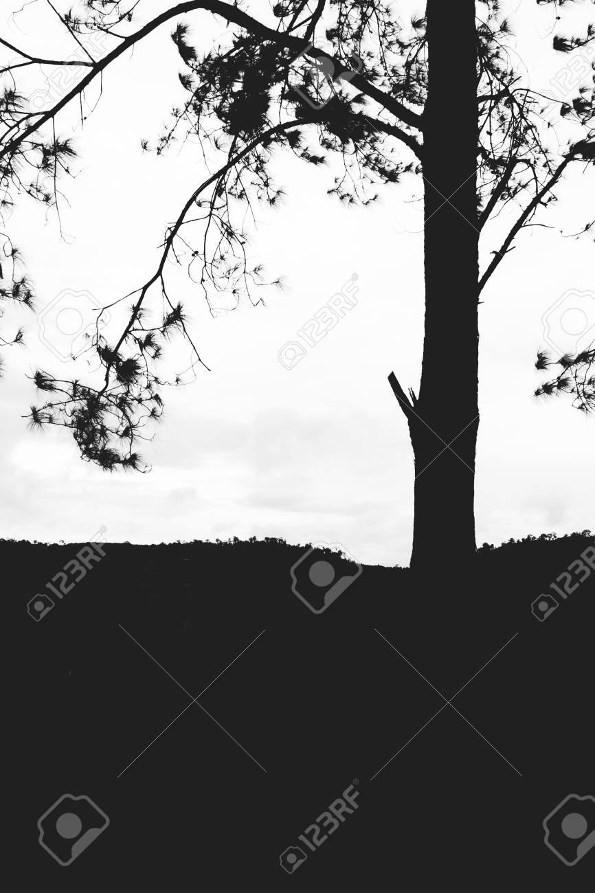 Lonely tree isolated on the mountain,vintage gain ,blackandwhite - 44897652