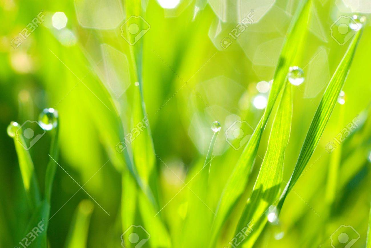 abstract green background from grass and drops Stock Photo - 13706811
