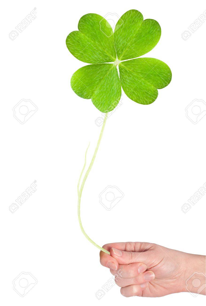 a big shamrock hold in hand Stock Photo - 13706857